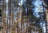 Пензенский губернатор спасает Ахунский лес от застройщиков