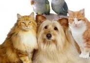 Лучшая ветеринария для ваших домашних любимцев