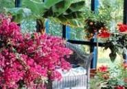 Зимний сад во все времена года