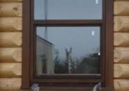 Выбираем окна в квартиру или в дом