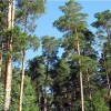 Жители Ахун вышли на пикет против стройки в лесу
