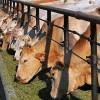 Пензенский губернатор заложил молочный комплекс