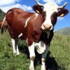 Новые молочно-товарные фермы могут стать гордостью Пензенской области