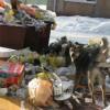 В мусорных проблемах города Пензы виноваты сами горожане