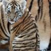 Летом зоопарк в Пензе будет работать до 20.00