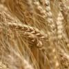 Биржевой лидер рассказал о тенденциях цен на хлеб в мире