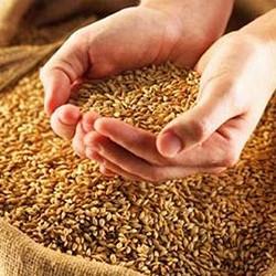 В Пензенской области намолотили 261 000 тонн зерна